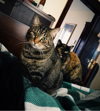 Colonel Whiskers & Little Shinobi watching you sleep, plotting your demise, and waiting for the automatic pet feeder.